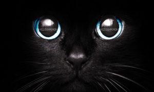 gatto nerd